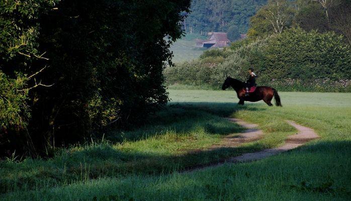 Kommt ein Pferd von rechts