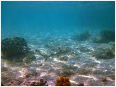 Komodo/Indonesien- Am Riff 3