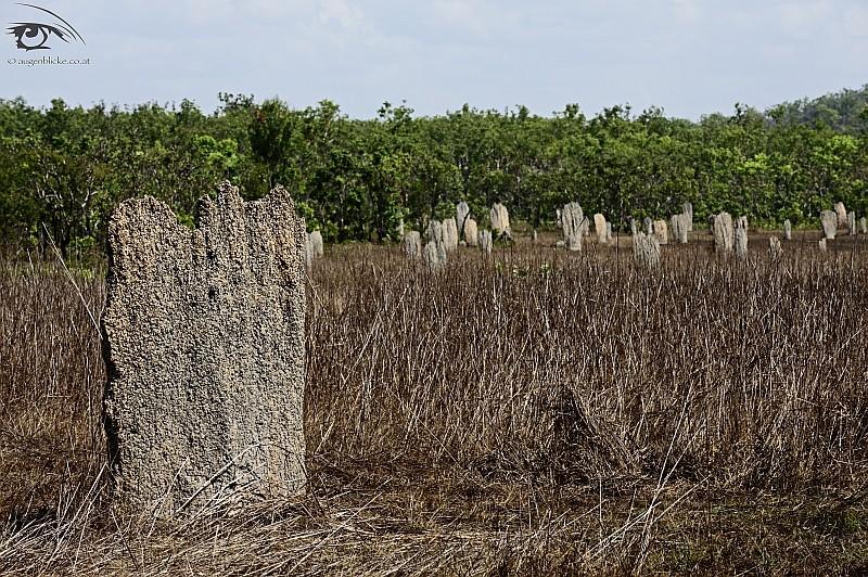 Kompass Termitenhügel im Litchfield NP
