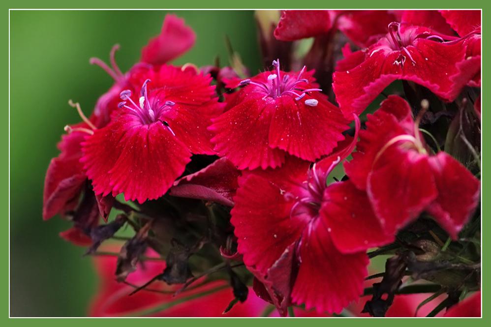 Komplementärfarben im Garten
