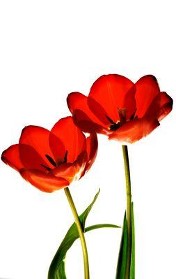 Komposition einer Blüte