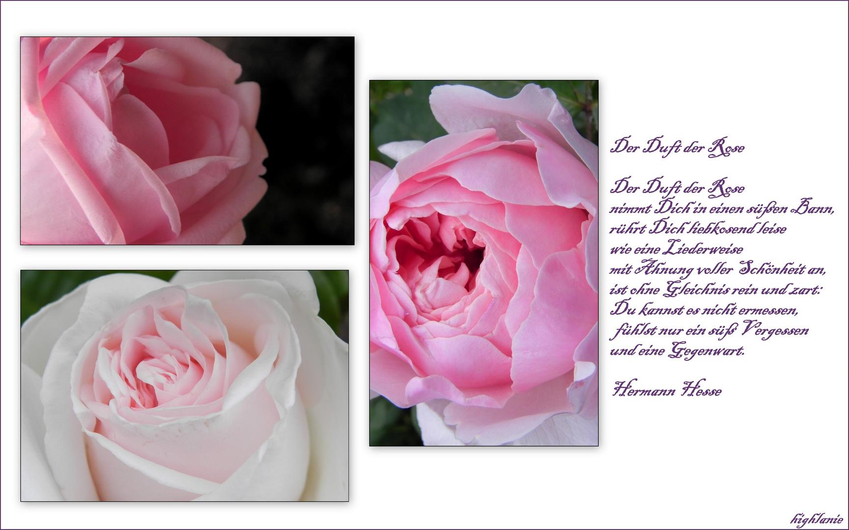 Komposition mit Rosen