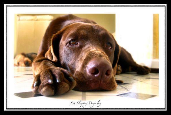 Kona *Let sleeping dogs lay*