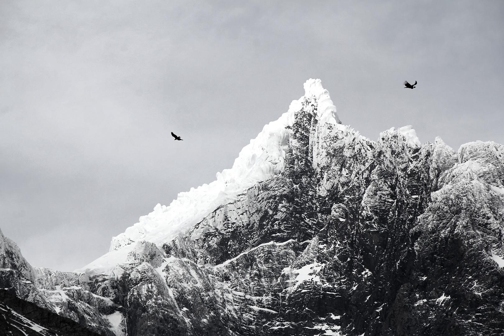 Kondore im Torres Del Paine Nationalpark