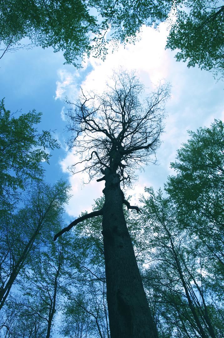 Konferenz der Bäume (Enting)