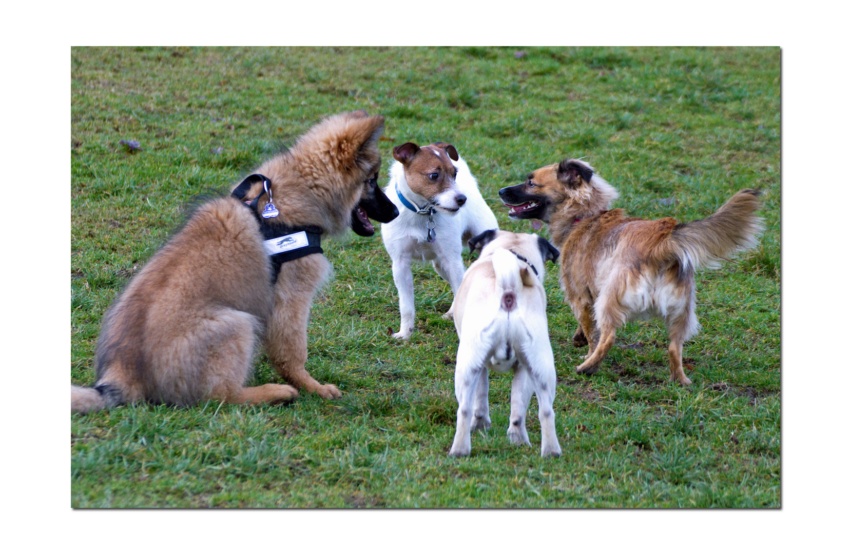 Konferenz der Hunde