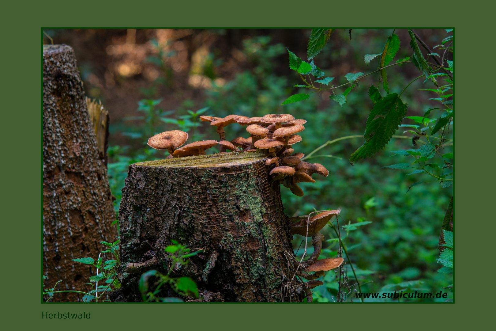 Konferenz der Waldbesitzer im Herbst