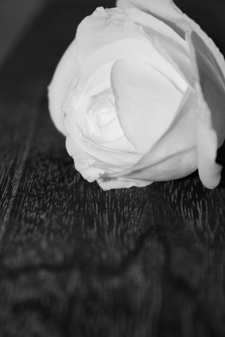 Kontrast Holz und Rose