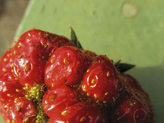 kontrast strawberry