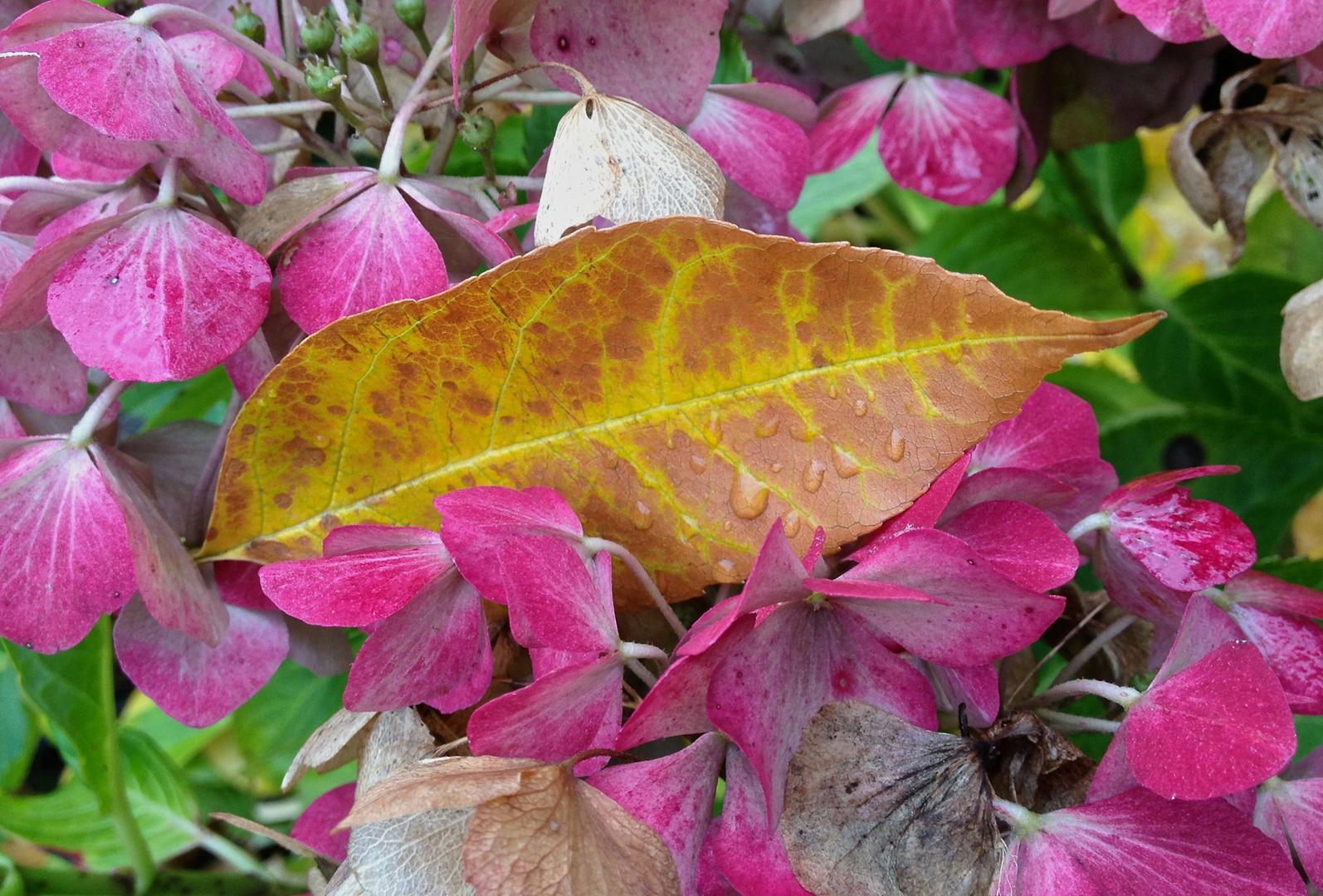 Kontraste im Herbst