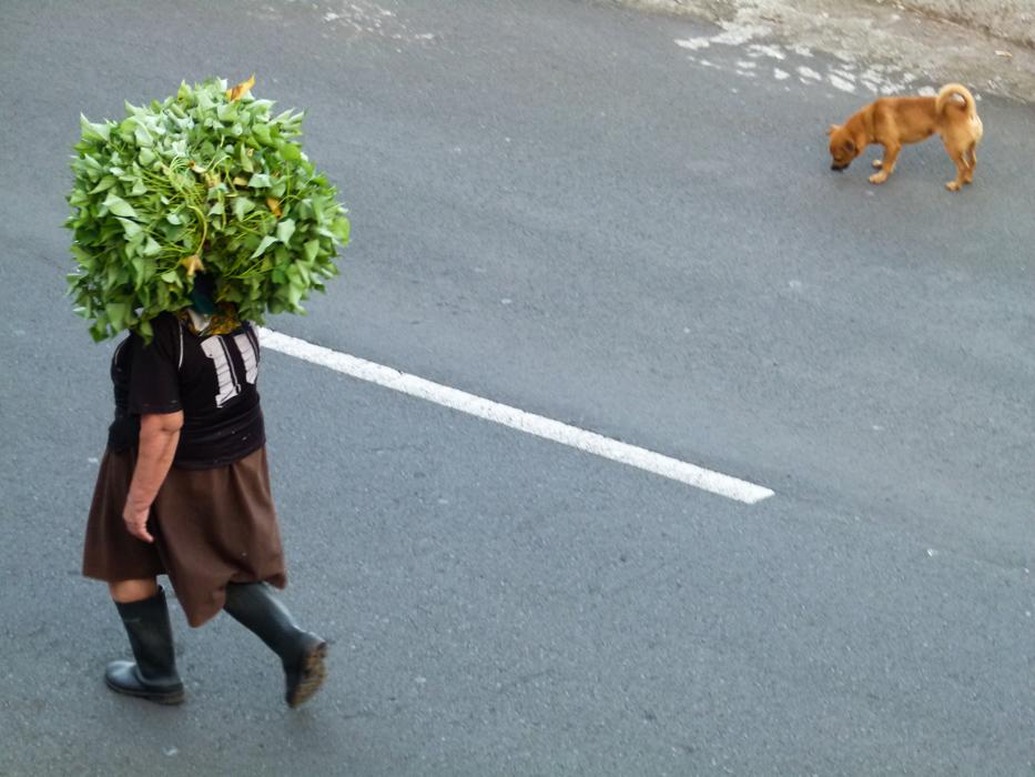 Kopflastentransport auf Madeira