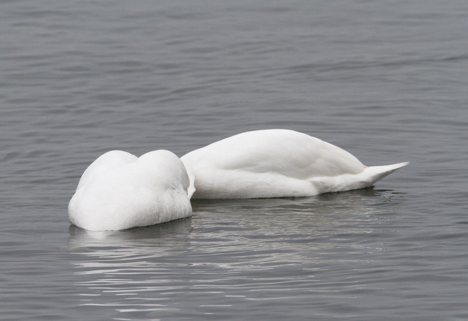 Kopflos in der Ostsee