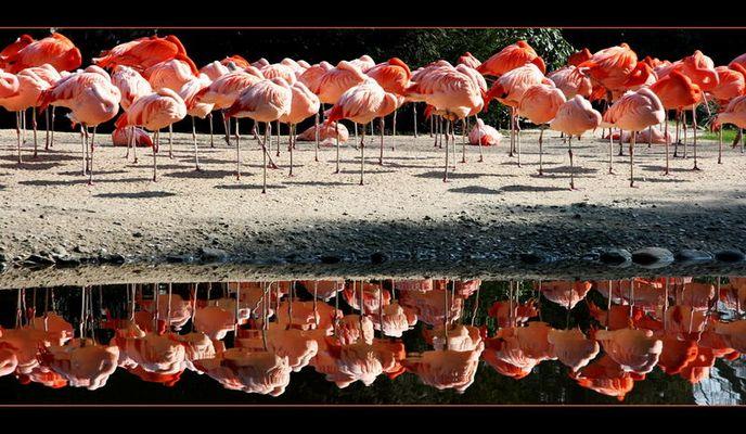 Kopfloses Flamingorama