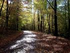 Kopfsteinpflaster im Herbst II