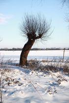 Kopfweide im Schnee (Zyfflich)