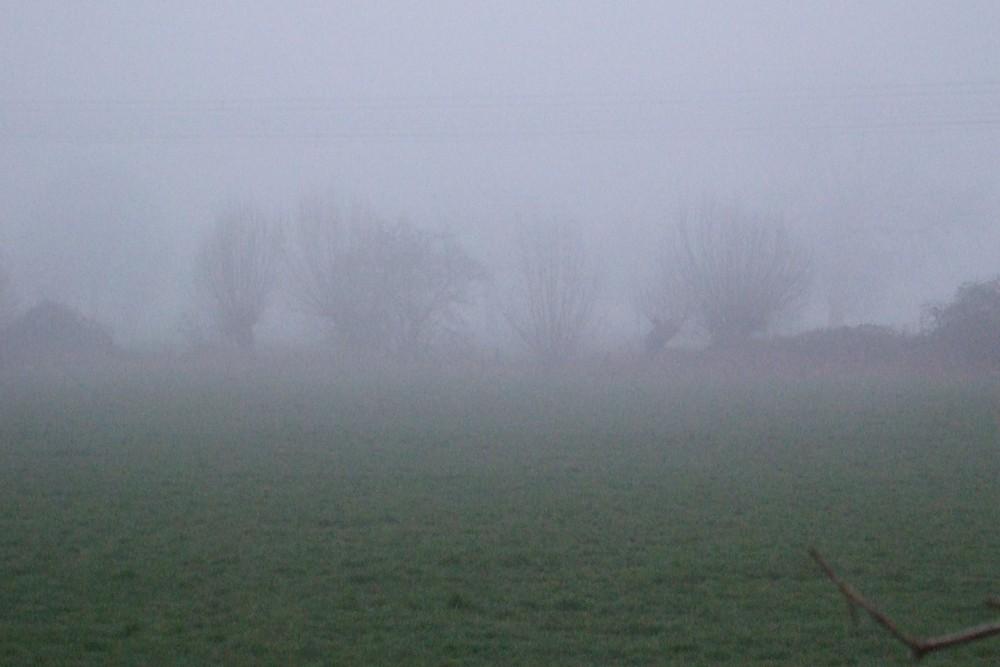 Kopfweiden im Nebel