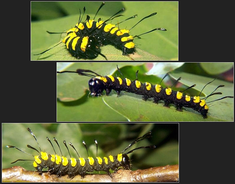 Koppelstein V - merkwürdiger Salamander