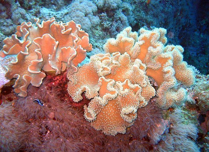 Korallen I