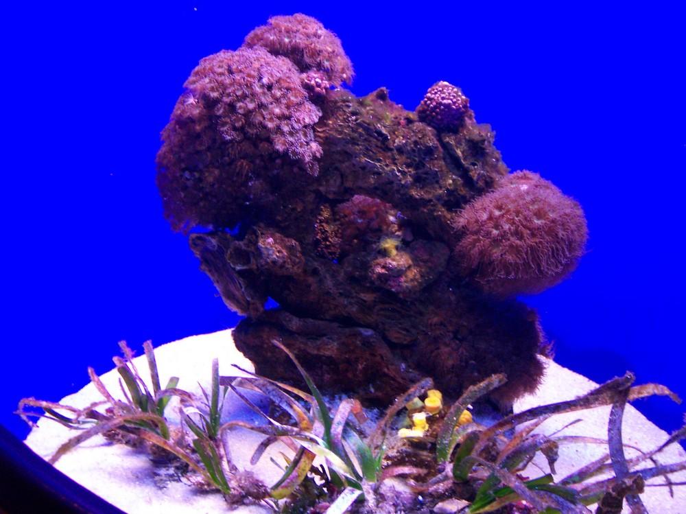 Korallen II