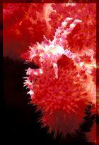 Korallenbewohner