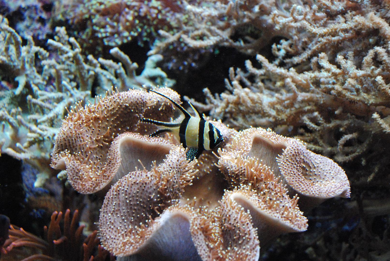 Korallenbewohner I