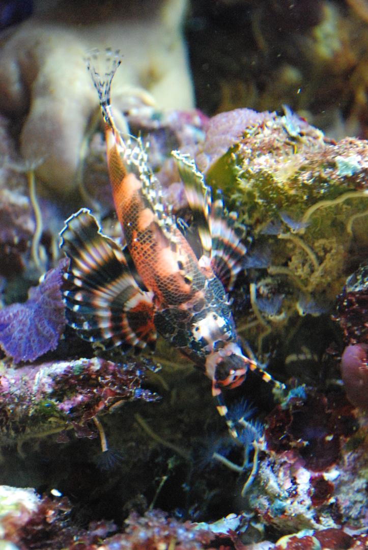 Korallenbewohner III
