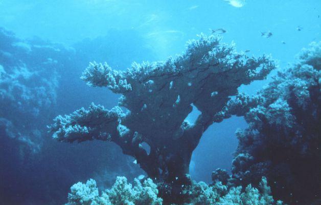 Korallenblock