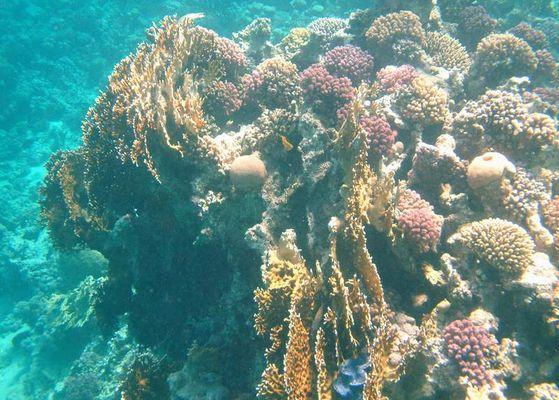 Korallenblock vor El Quseir