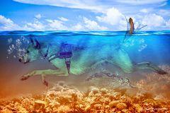 Korallenkalli