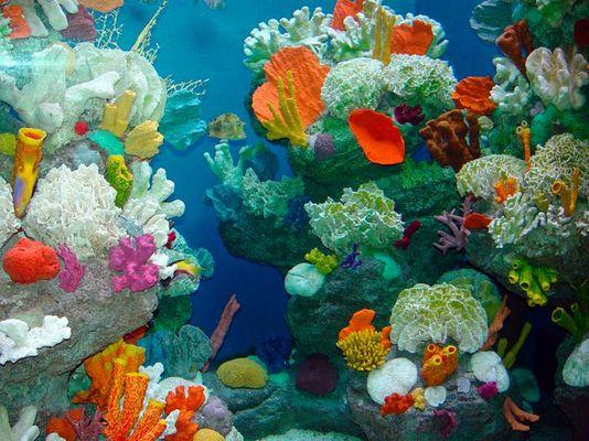 Korallenpracht