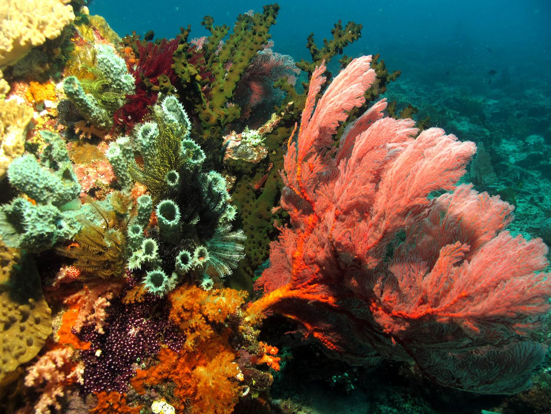 Korallenriff Busa Bora - Bangka Island bei Nord Sulawesi
