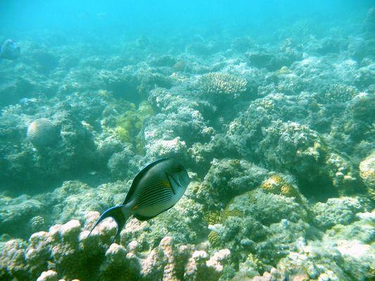 Korallenriff (leider ziemlich mitgenommen) in Ägypten...