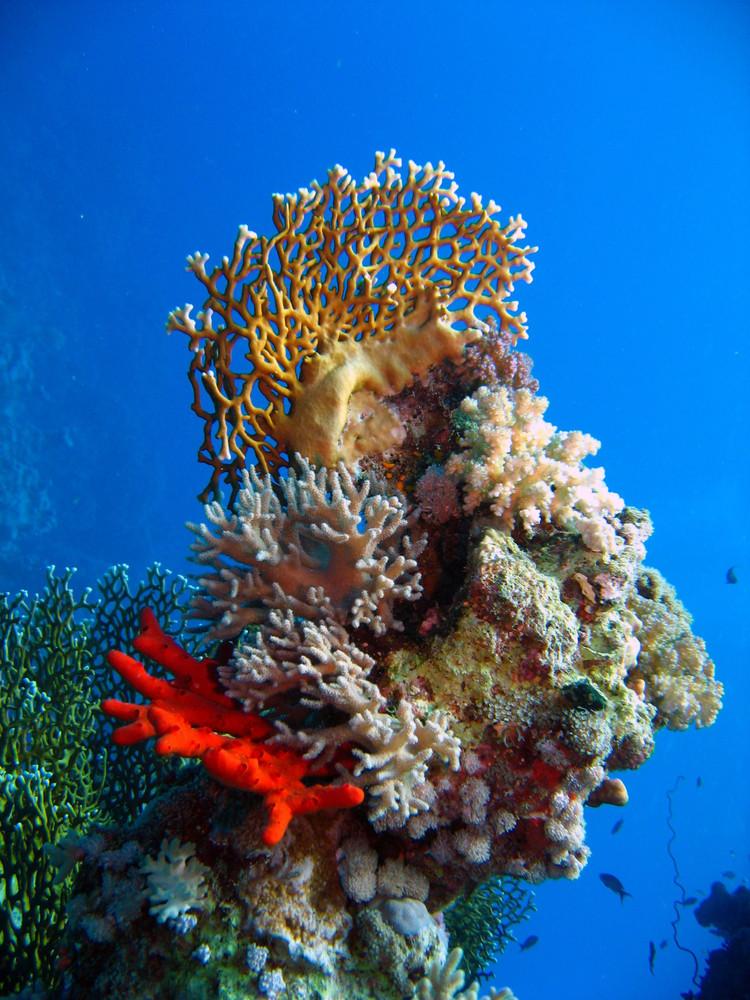 Korallenwächter - Phantasie ist angesagt! Zurücklehnen und das Ganze betrachten! Gehts jetzt?