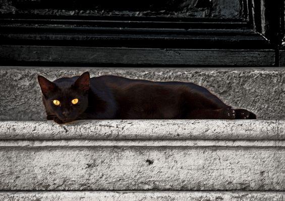 Korfu-Katze