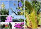 Korfus Blüten