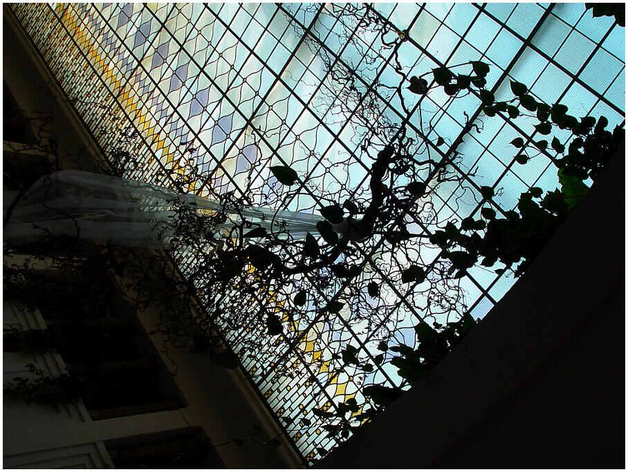 Korkenzieherhaselnußzweig gegen Dachverglasung der Trinkhalle im Bad Kissinger Kurhaus