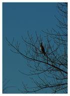 Kormoran in den Bäumen...