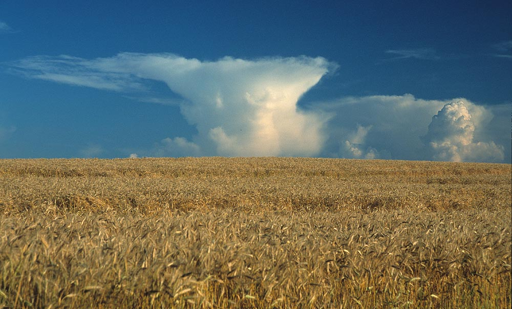 Korn und Wolken
