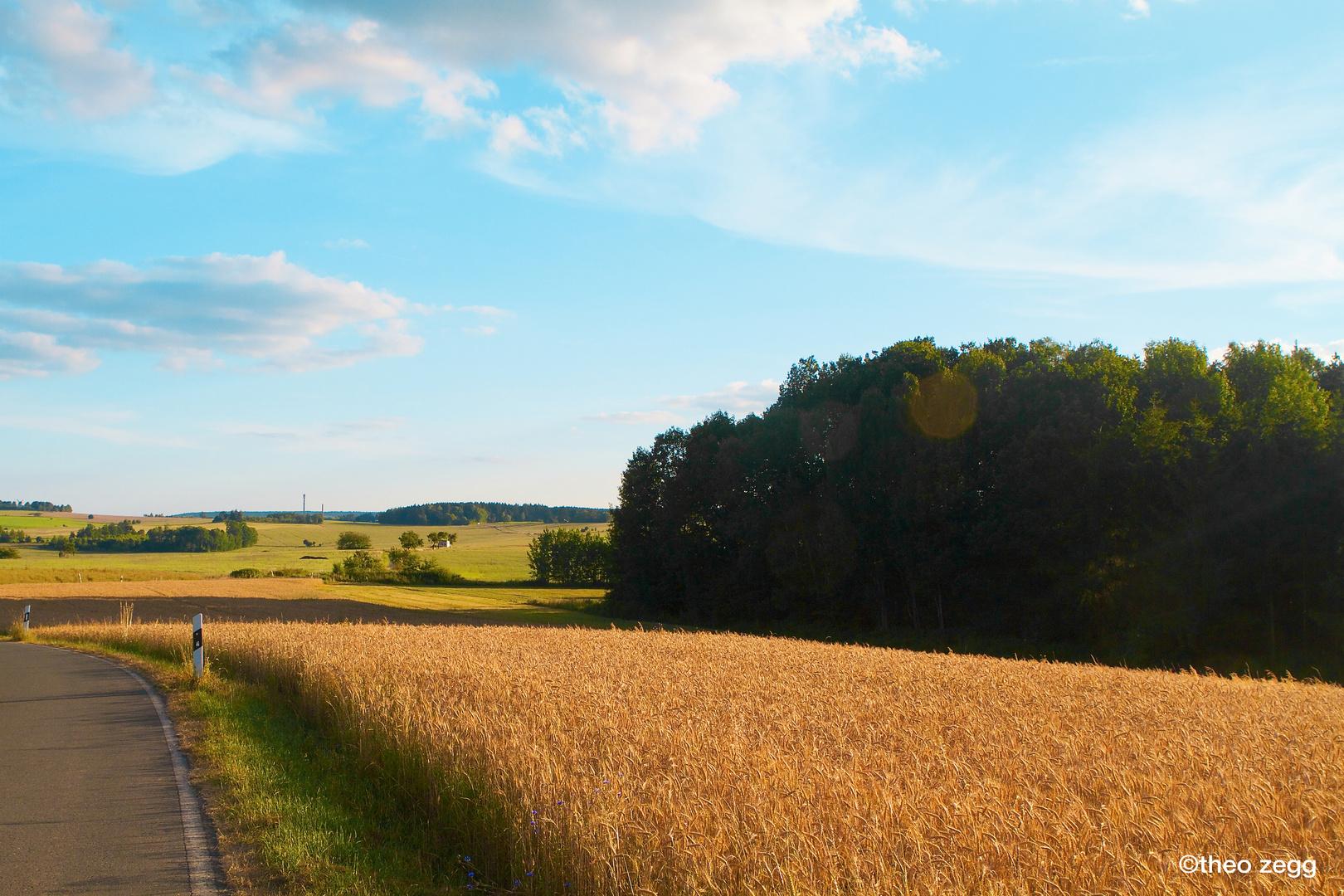 kornfeld bei schönbach-vogtland