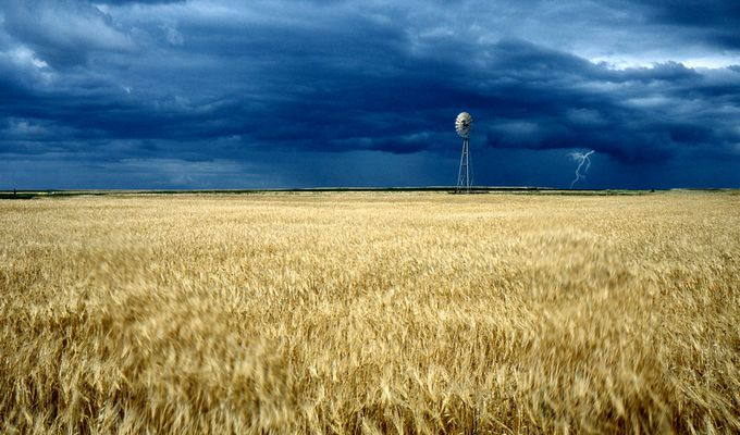 Kornfeld bei Sturm