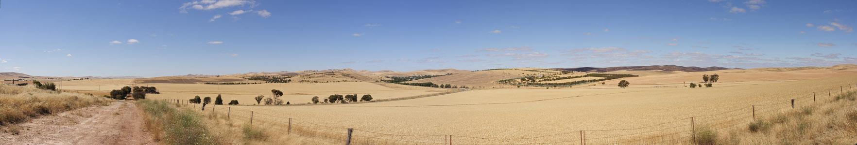 Kornfelder vor Adelaide