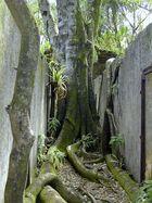 Kourou Dschungel