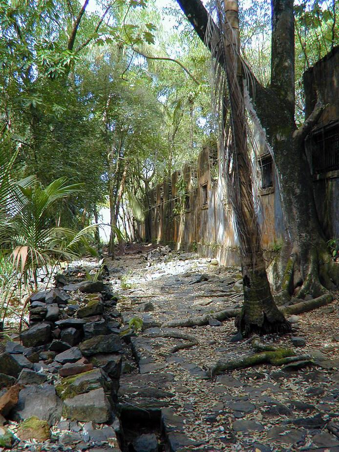 Kourou Dschungel 4