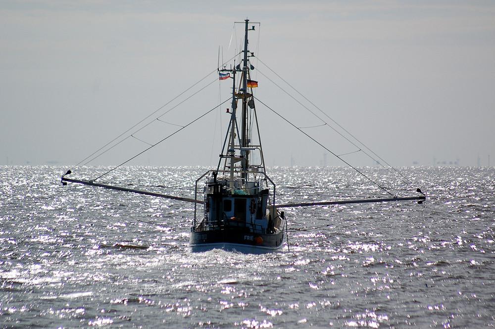 Krabben, der Schatz in der Silbersee