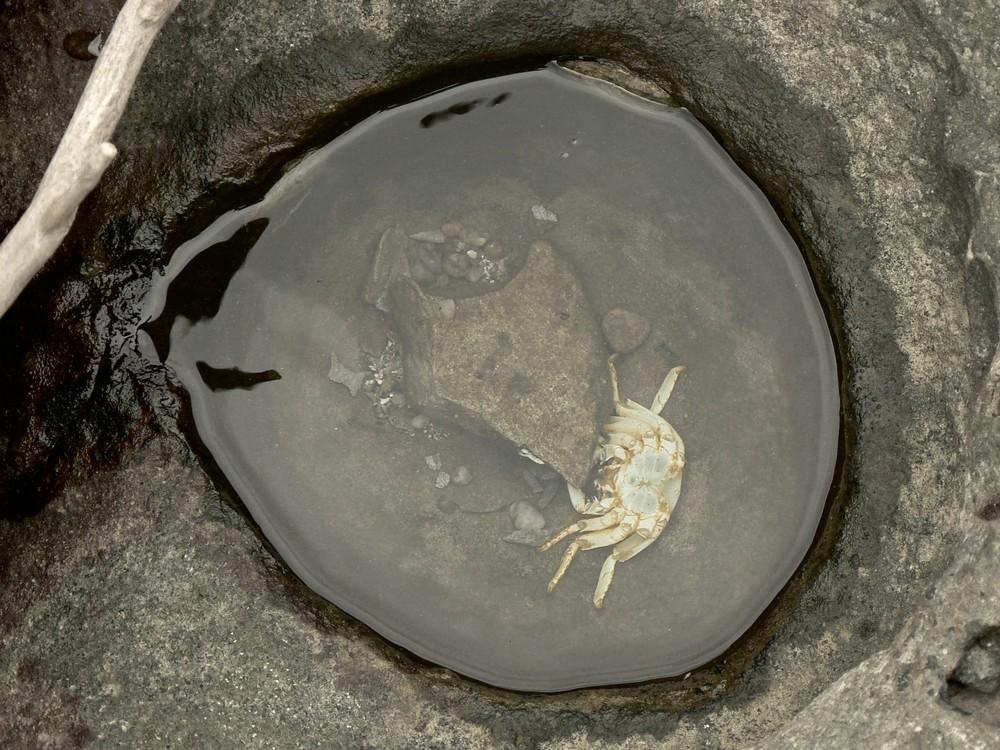 Krabbencocktail (nicht mehr ganz so frisch...)