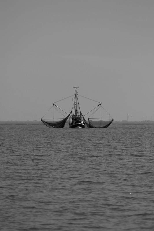 Krabbenfänger