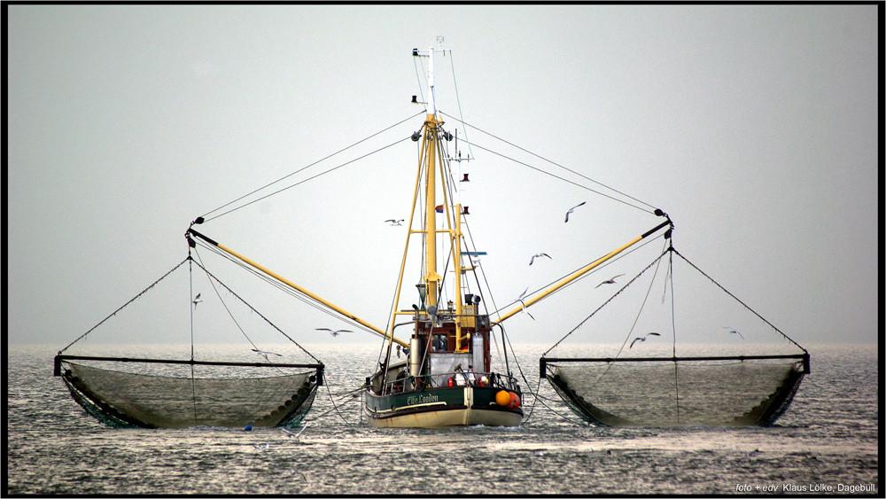 Krabbenfischer bei Dagebüll