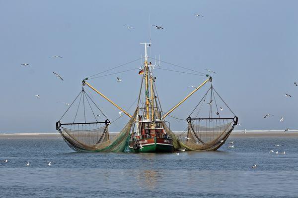 Krabbenfischer vor der Insel Juist