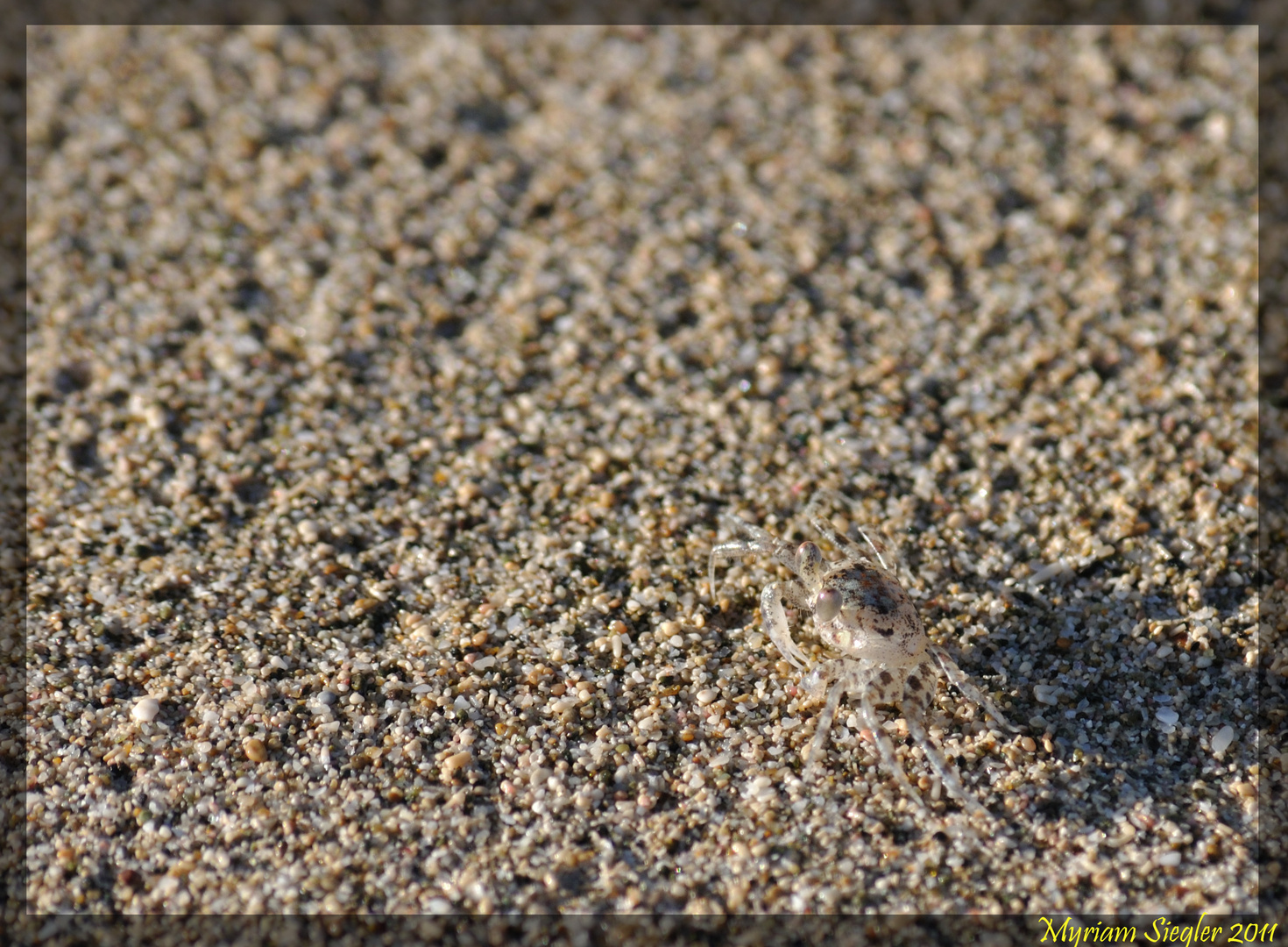 Krabbenkarl