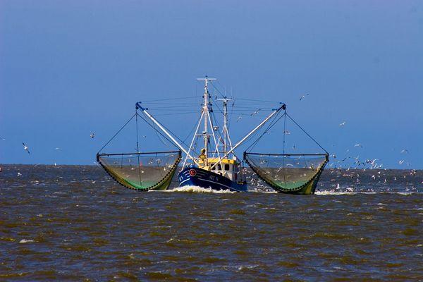 Krabbenkutter nähe Norderney